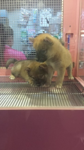 These two little ones were not even the cutest puppies this shop had!