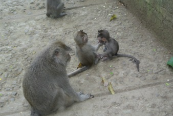 The monkey on the right was 2 weeks old. Awww