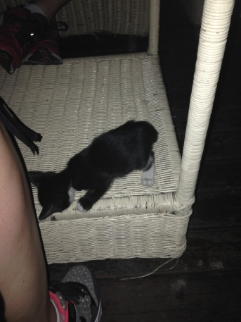 """I named this kitten """"The Worst"""" because it was the worst at sitting still so I could take a picture."""